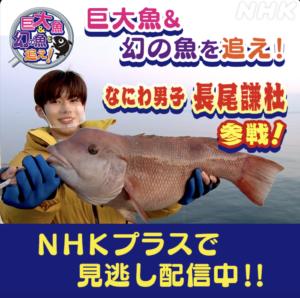 見逃し配信『巨大魚&幻の魚を追え!~大阪湾の魚大調査』
